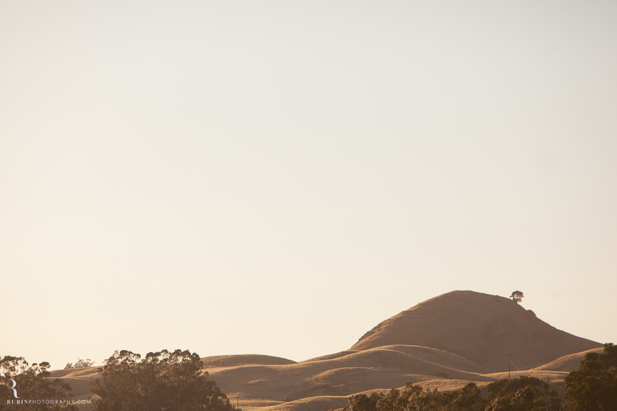Sonoma Winery Photography By Food and wine photographer Rubin Photography0001