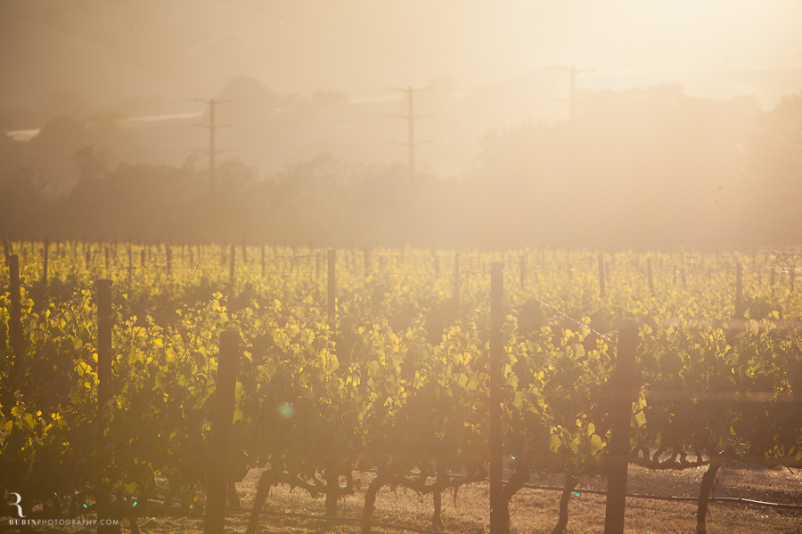 Sonoma Winery Photography By Food and wine photographer Rubin Photography0002