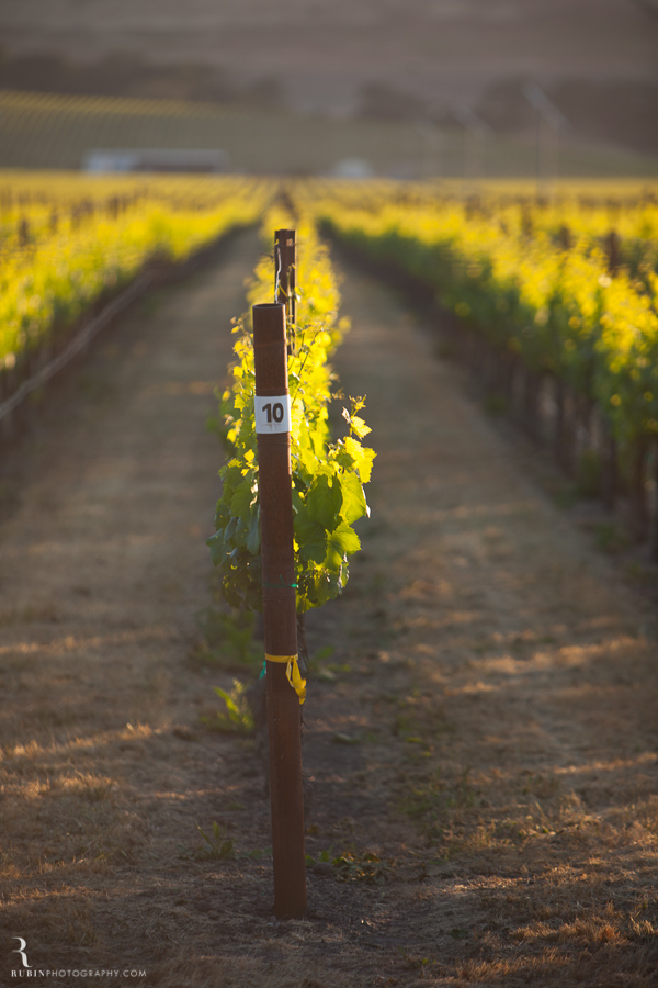 Sonoma Winery Photography By Food and wine photographer Rubin Photography0004
