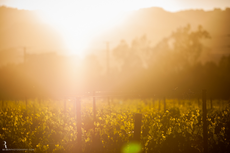 Sonoma Winery Photography By Food and wine photographer Rubin Photography0005