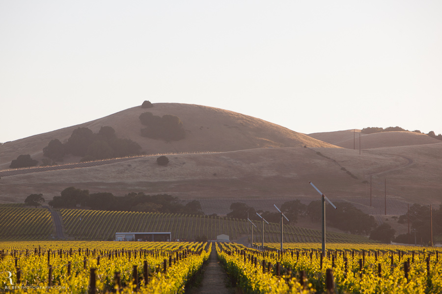 Sonoma Winery Photography By Food and wine photographer Rubin Photography0006
