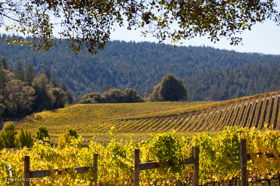Golden Eye Winery Lifestyle Photography By Wine Photographer Alex Rubin in Anderson Valley_0010
