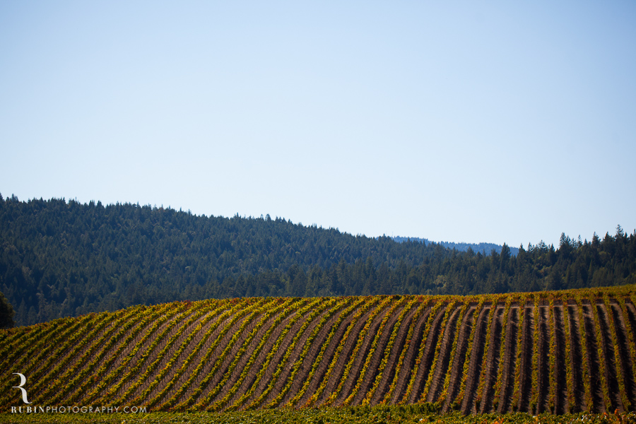 Golden Eye Winery Lifestyle Photography By Wine Photographer Alex Rubin in Anderson Valley_0015