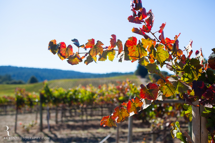 Golden Eye Winery Lifestyle Photography By Wine Photographer Alex Rubin in Anderson Valley_0016