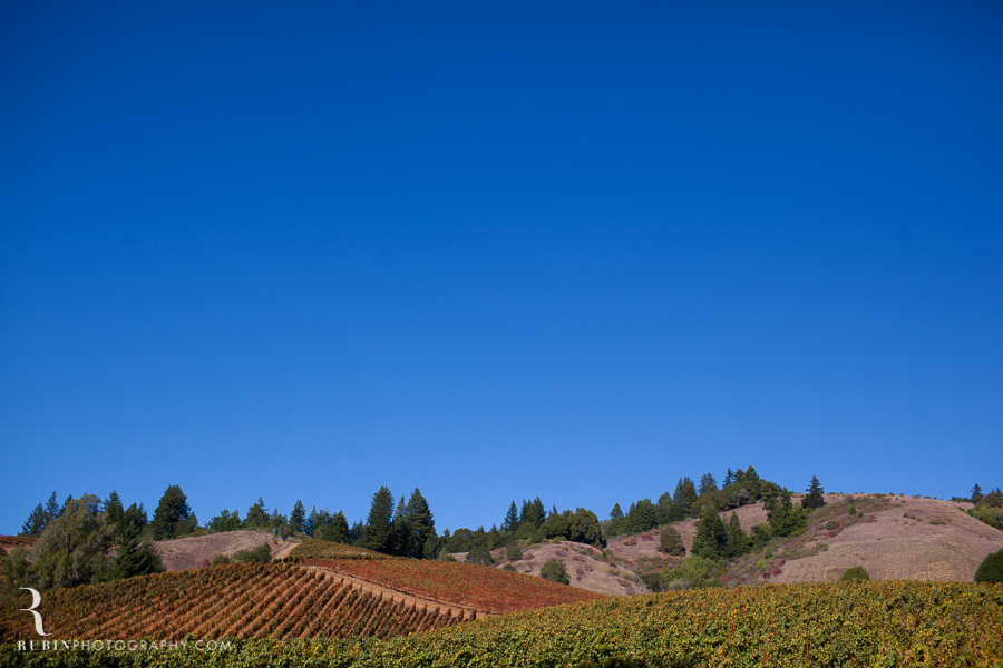 Golden Eye Winery Lifestyle Photography By Wine Photographer Alex Rubin in Anderson Valley_0020