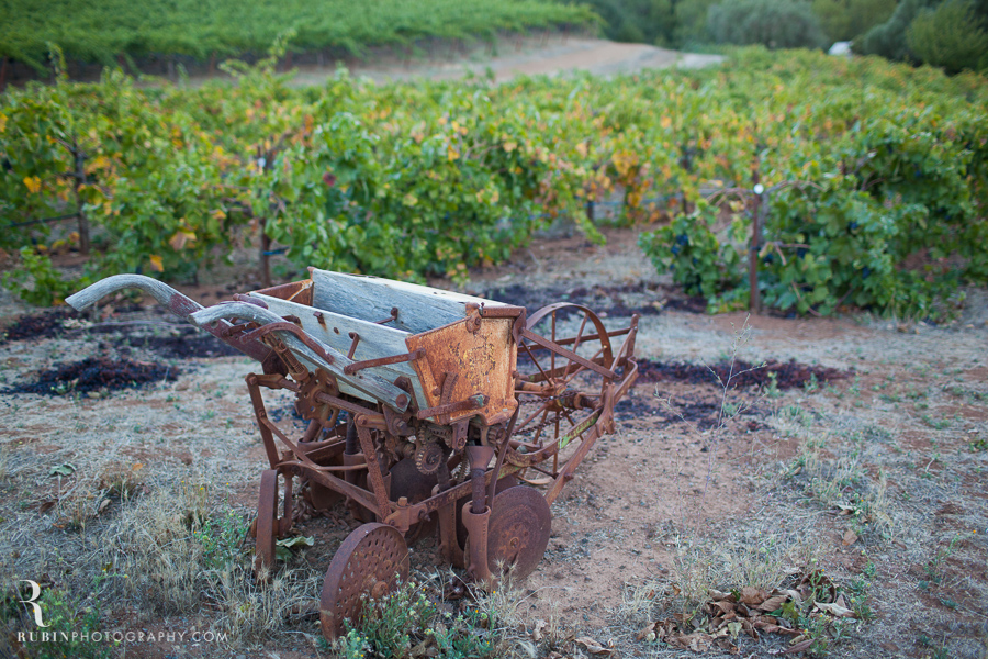 Vineyard and Lifestyle Photographer By Rubin Photography on Moon Mountain in Sonoma_0001