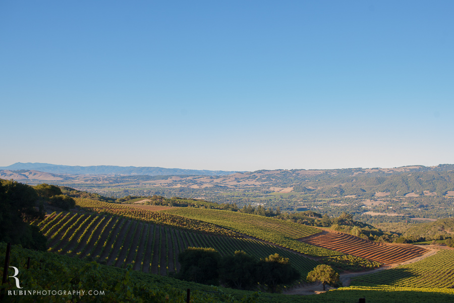Vineyard and Lifestyle Photographer By Rubin Photography on Moon Mountain in Sonoma_0005