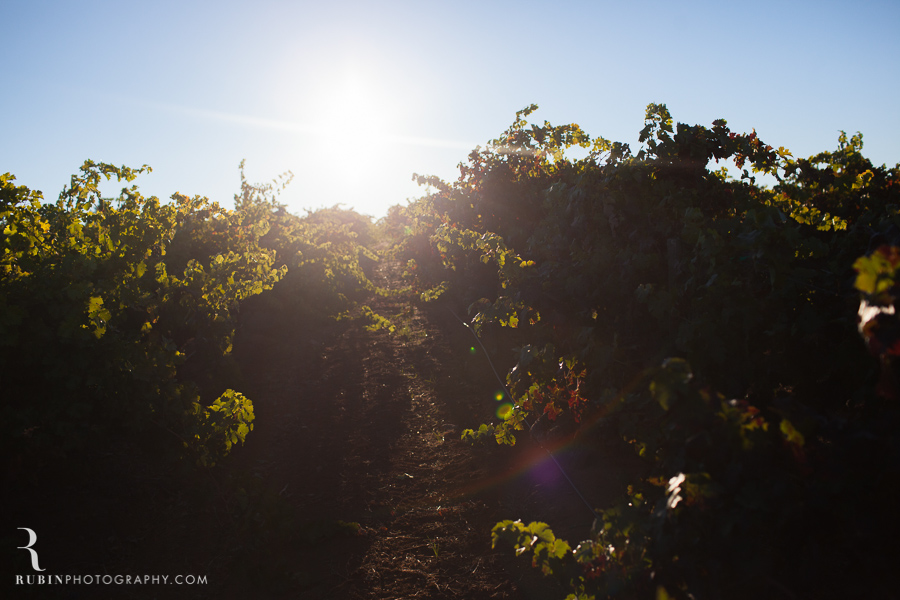 Vineyard and Lifestyle Photographer By Rubin Photography on Moon Mountain in Sonoma_0006