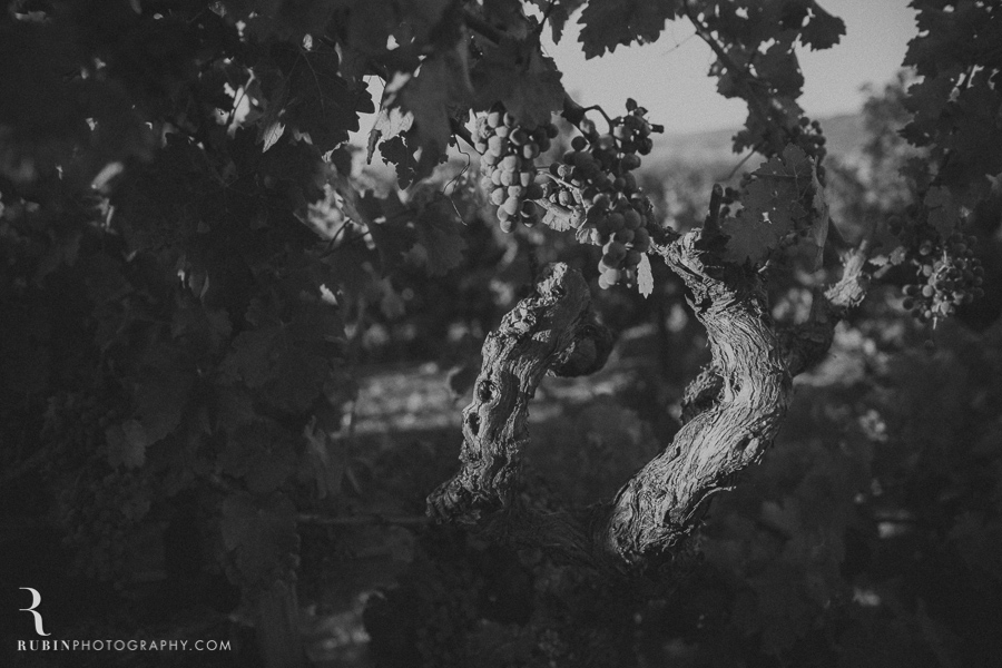 Vineyard and Lifestyle Photographer By Rubin Photography on Moon Mountain in Sonoma_0008