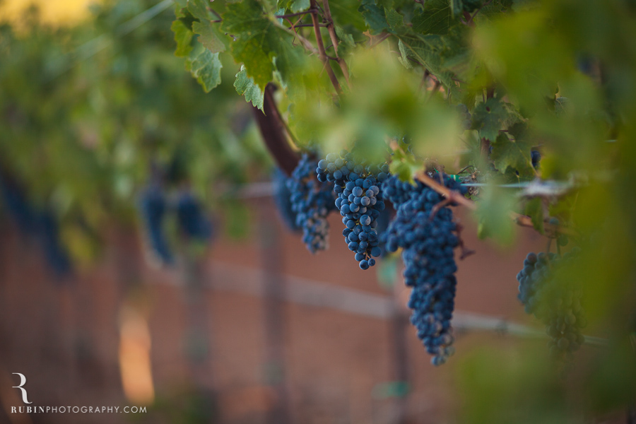 Vineyard and Lifestyle Photographer By Rubin Photography on Moon Mountain in Sonoma_0016