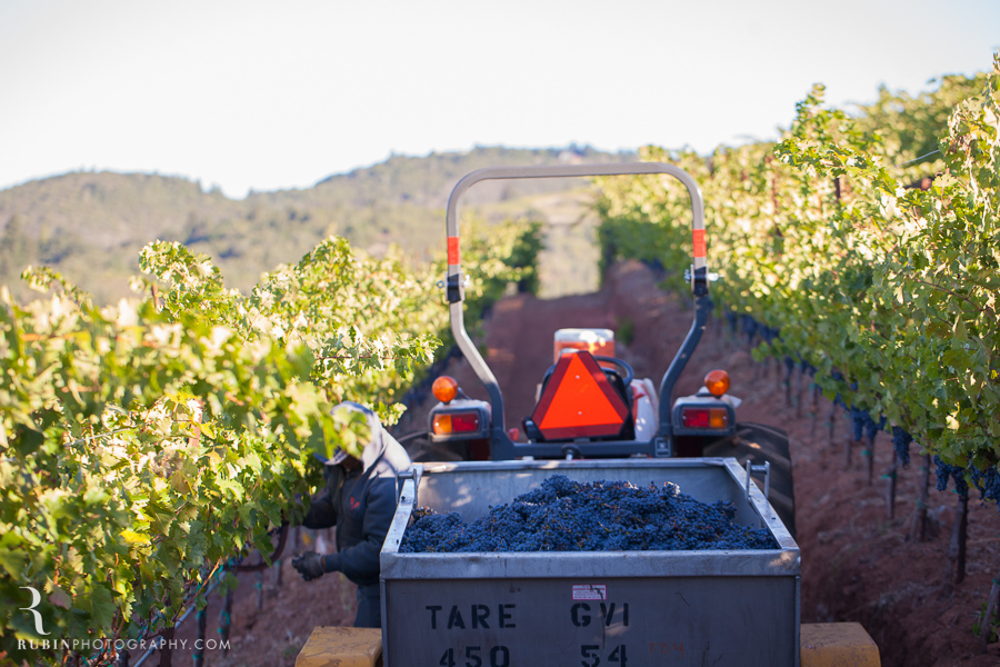Vineyard and Lifestyle Photographer By Rubin Photography on Moon Mountain in Sonoma_0019