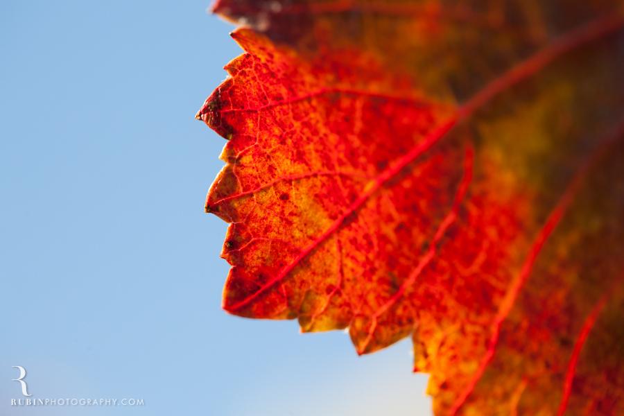 Gundlach Bundschu Winery and Vineyards Photographs By Rubin Photography in Sonoma_0002