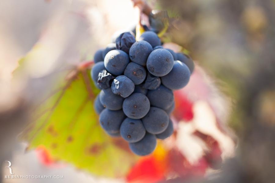 Gundlach Bundschu Winery and Vineyards Photographs By Rubin Photography in Sonoma_0003