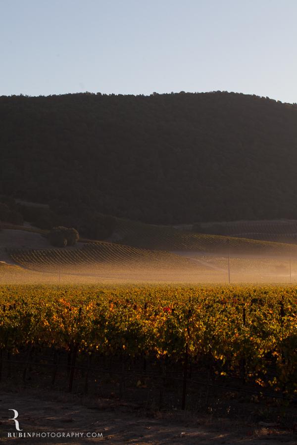 Gundlach Bundschu Winery and Vineyards Photographs By Rubin Photography in Sonoma_0005