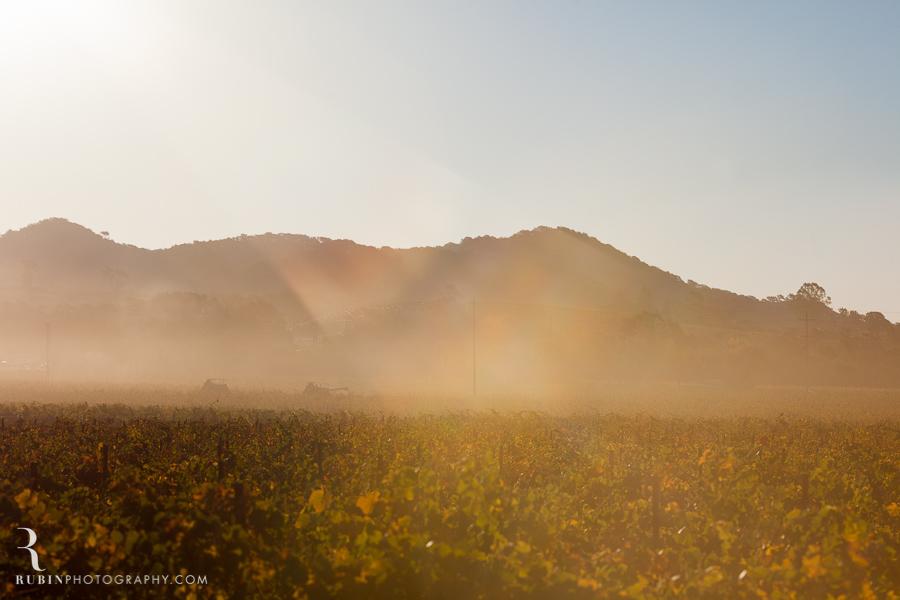 Gundlach Bundschu Winery and Vineyards Photographs By Rubin Photography in Sonoma_0006