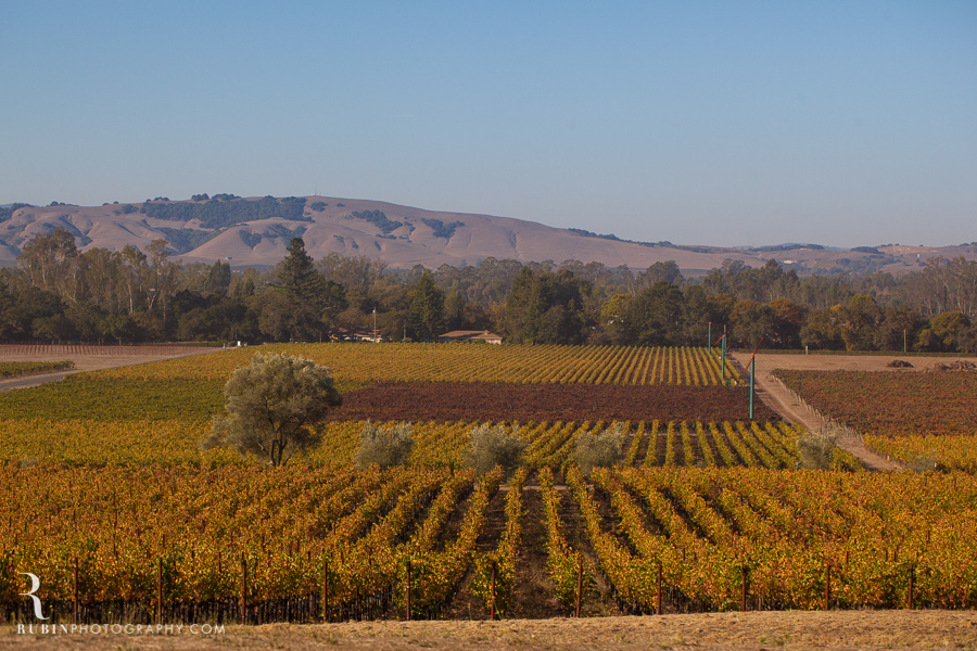 Gundlach Bundschu Winery and Vineyards Photographs By Rubin Photography in Sonoma_0008