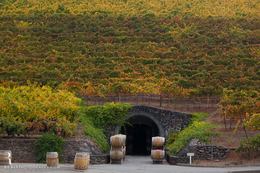 Kunde Winery Fall Vineyard Photographs By Rubin Photography in Sonoma_0003