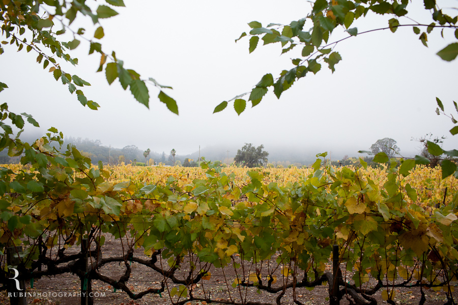 Kunde Winery Fall Vineyard Photographs By Rubin Photography in Sonoma_0006