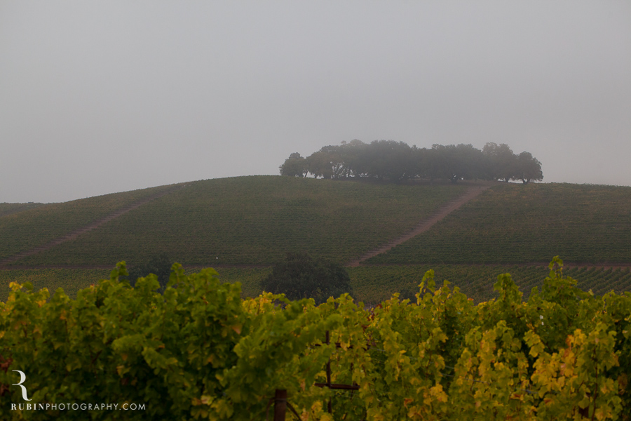 Kunde Winery Fall Vineyard Photographs By Rubin Photography in Sonoma_0007
