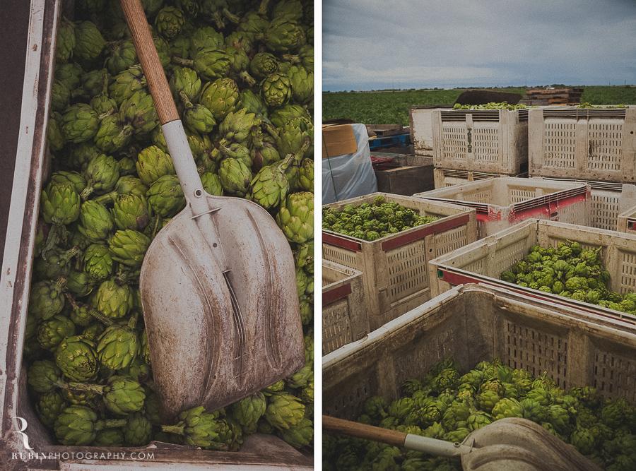 castroville artichoke photos by Rubin Photography Napa Food Photographer0001