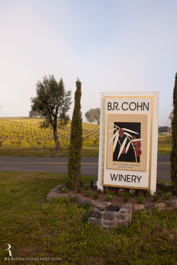 BR Cohn Vinyeard in sprint with mustard by Napa Wine and Commercial Photographer Rubin Photography in  Sonoma_0001