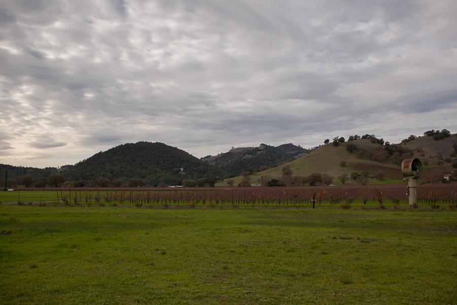 Chateau Montelena by Napa Wine Photographer Rubin Photography_0006