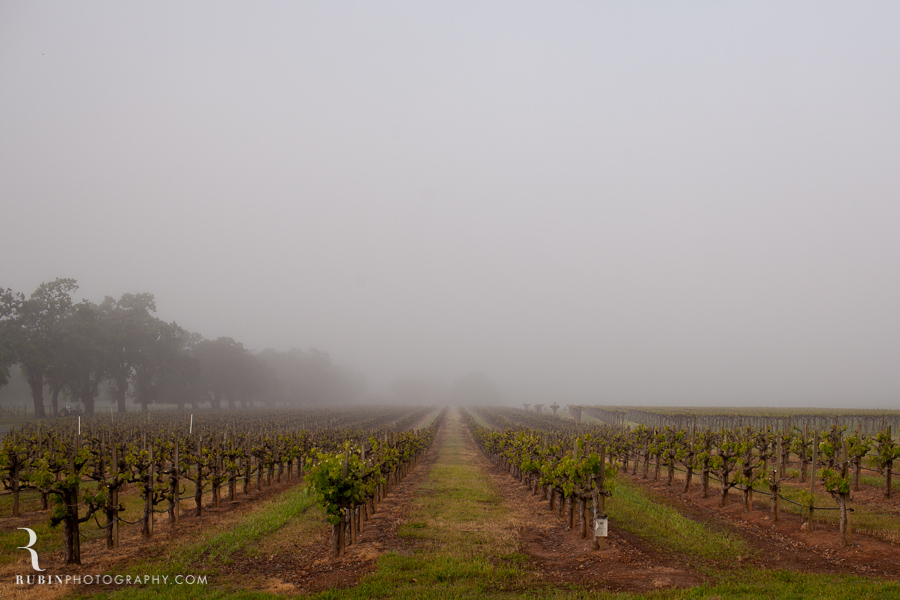 Foggy Vineyard by Napa Wine Photographer Alex Rubin in Sonoma_0001