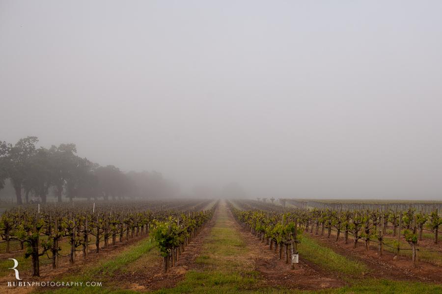 Foggy Vineyard by Napa Wine Photographer Alex Rubin in Sonoma_0001