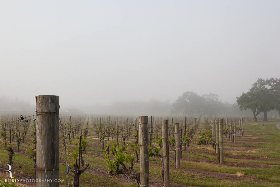 Foggy Vineyard by Napa Wine Photographer Alex Rubin in Sonoma_0002