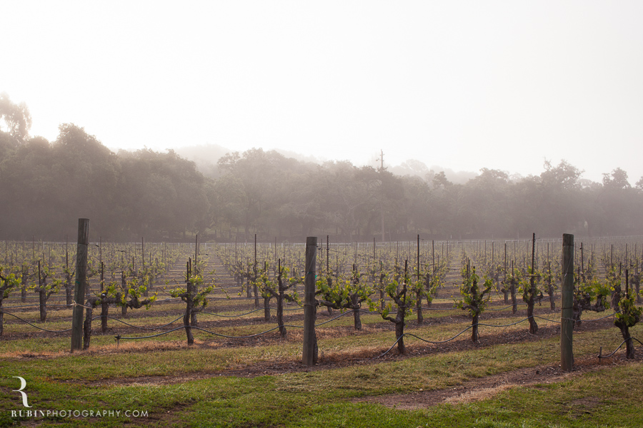 Foggy Vineyard by Napa Wine Photographer Alex Rubin in Sonoma_0004