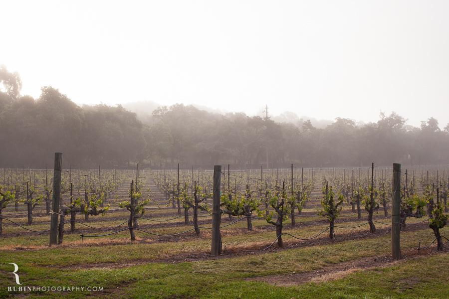 Foggy Vineyard by Napa Wine Photographer Alex Rubin in Sonoma_0004