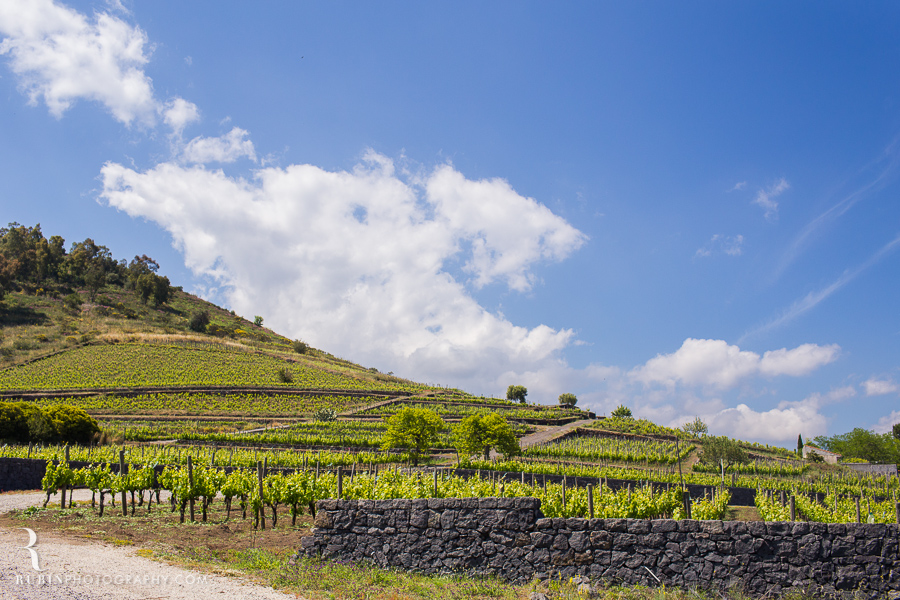 Benanti's Vineyard on Etna in Sicily Italy by Photographer Alex Rubin001