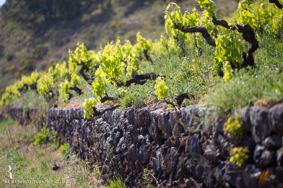 Benanti's Vineyard on Etna in Sicily Italy by Photographer Alex Rubin002