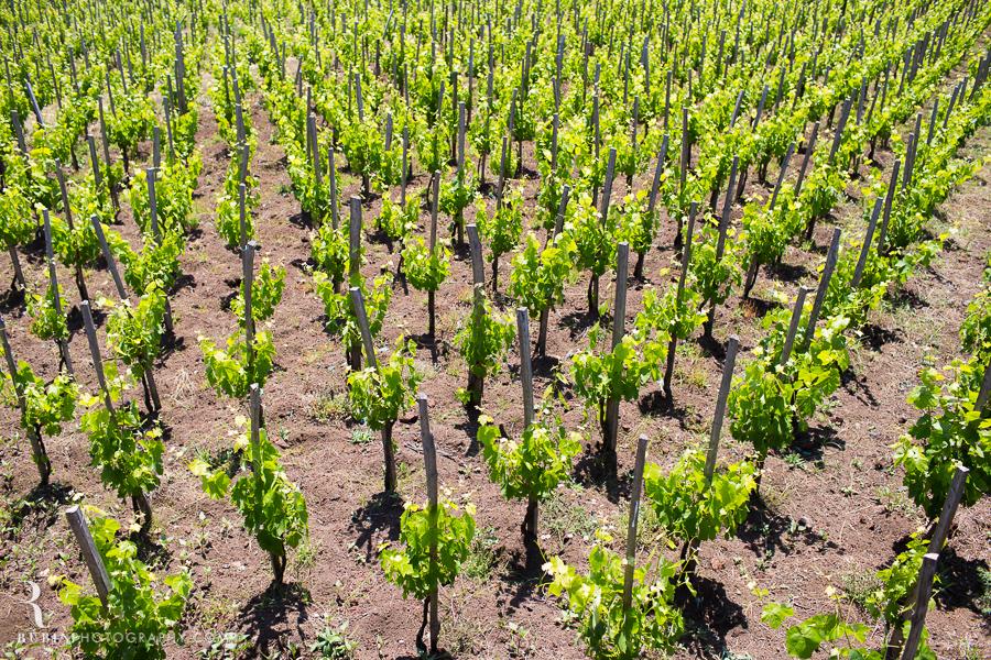 Benanti's Vineyard on Etna in Sicily Italy by Photographer Alex Rubin003