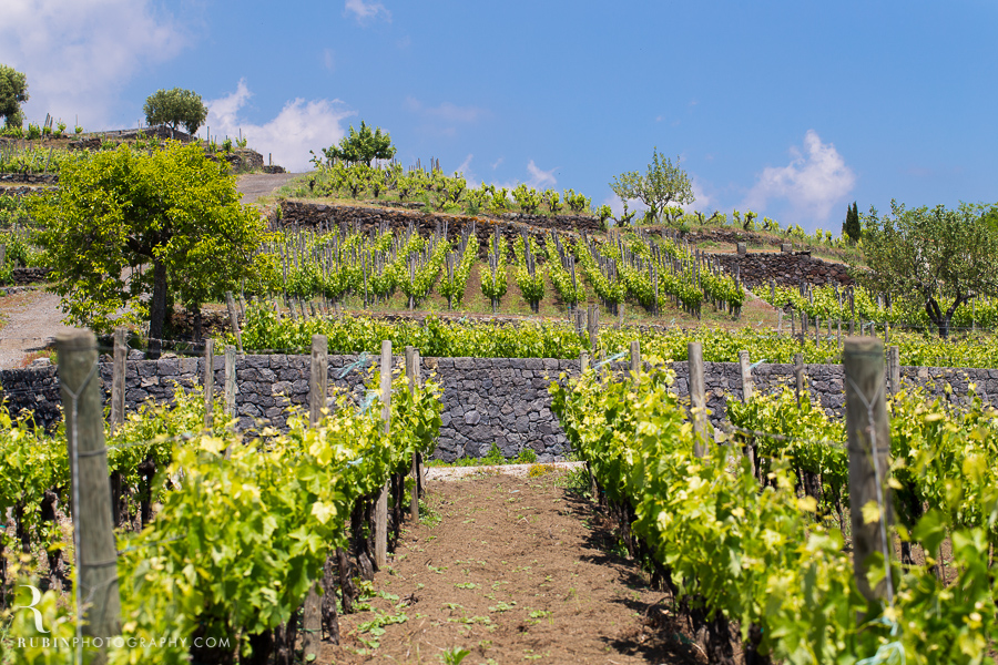 Benanti's Vineyard on Etna in Sicily Italy by Photographer Alex Rubin004