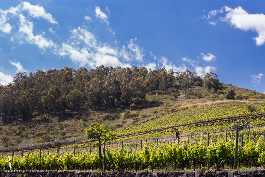 Benanti's Vineyard on Etna in Sicily Italy by Photographer Alex Rubin005