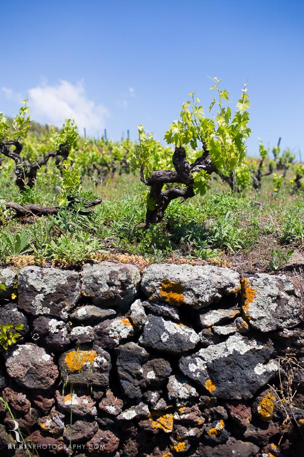 Benanti's Vineyard on Etna in Sicily Italy by Photographer Alex Rubin006