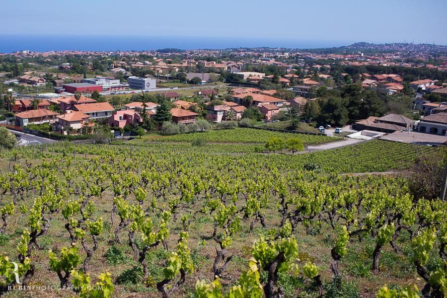 Benanti's Vineyard on Etna in Sicily Italy by Photographer Alex Rubin008