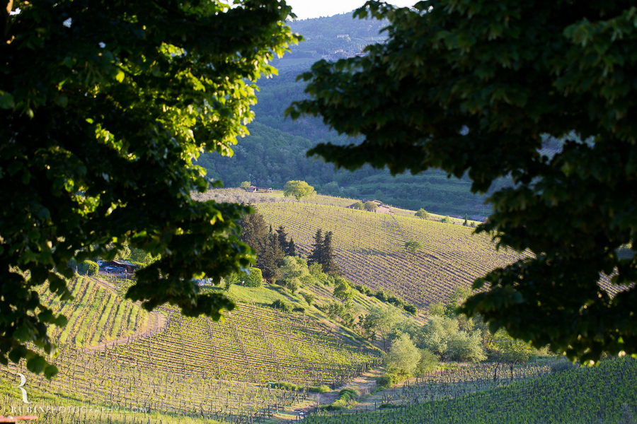 Tuscany Italy Wine and Vineyard Photography at Villa Branca by Rubin Photography003