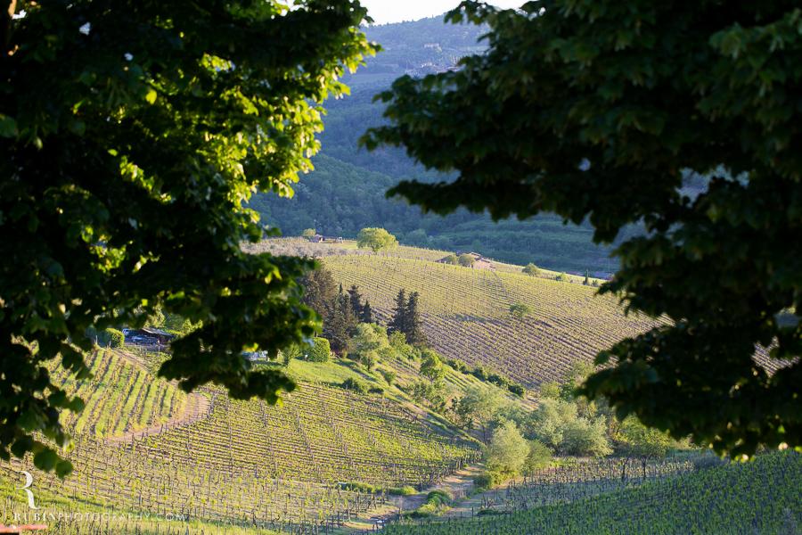 Tuscany Italy Wine and Vineyard Photography at Villa Branca by Rubin Photography003