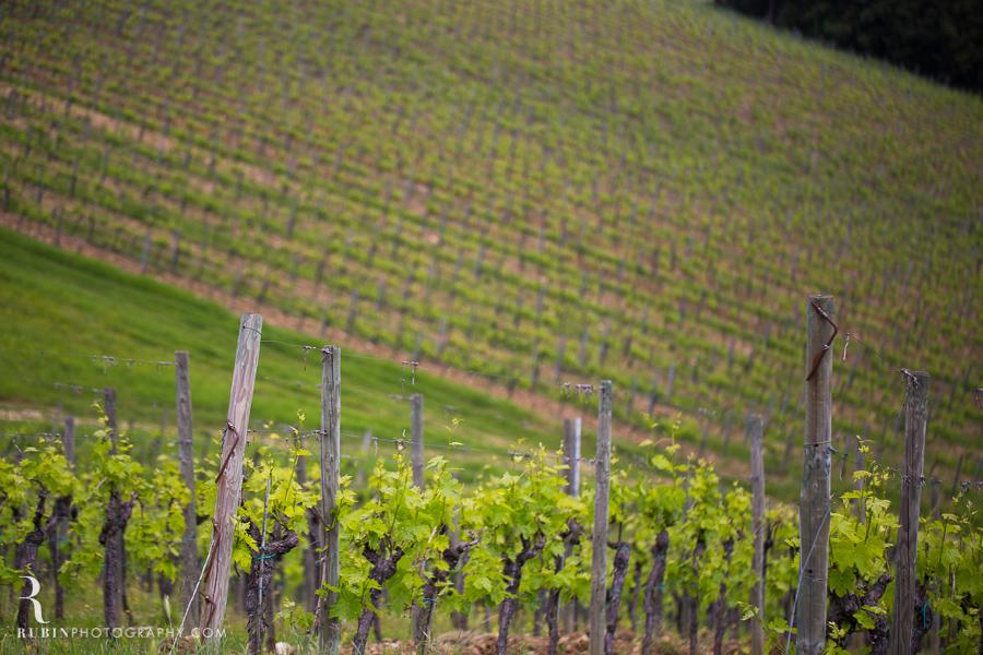 Tuscany Italy Wine and Vineyard Photography at Villa Branca by Rubin Photography006