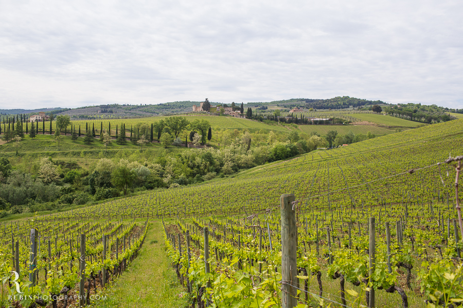Tuscany Italy Wine and Vineyard Photography at Villa Branca by Rubin Photography024