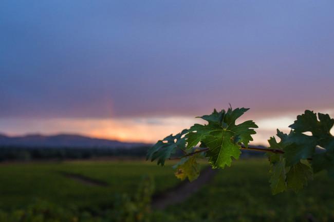 Napa-Wine-Photographer-0019