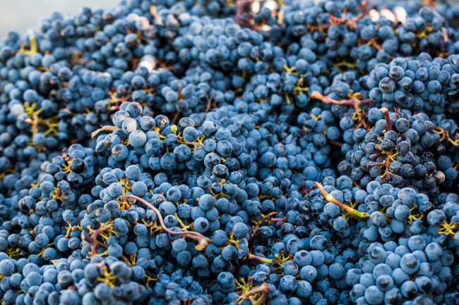 Napa-Wine-Photographer-0038