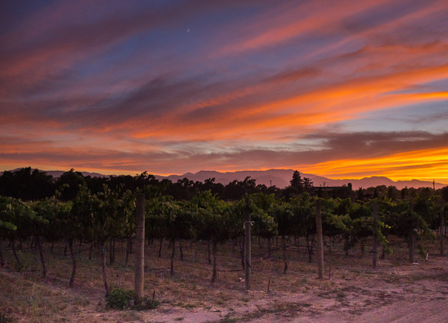 Napa-Wine-Photographer-0045