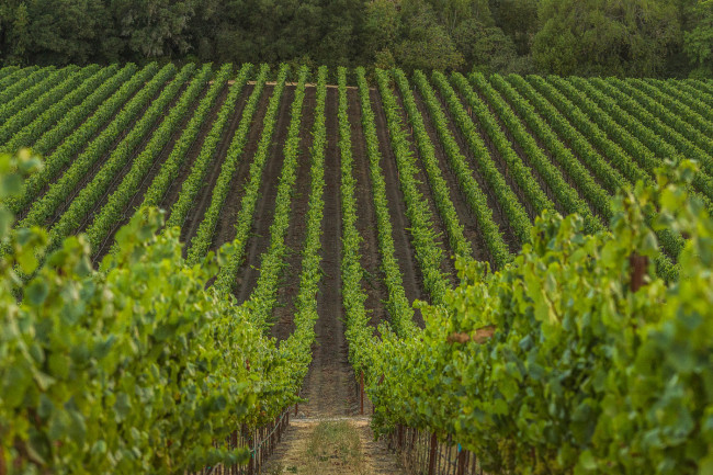 Napa-Wine-Photographer-0046