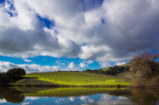 Napa-Wine-Photographer-0047