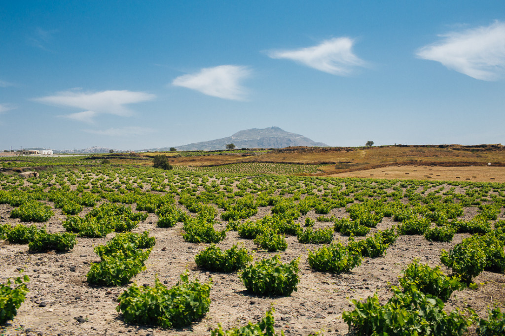 Greek Wine and Santorini vineyrads by Commercial Photographer  Alexander Rubin Photography_baced in Napa0003