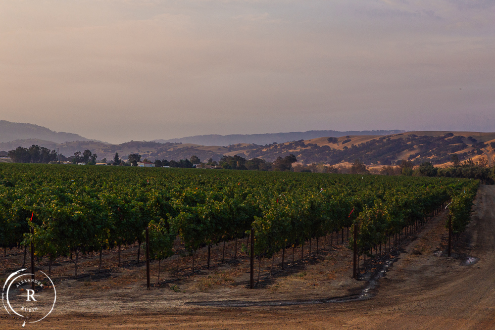 Alexander_Rubin_Photography_Napa_Editorial_Wine_Photographer_Wente_Vineyards_0003