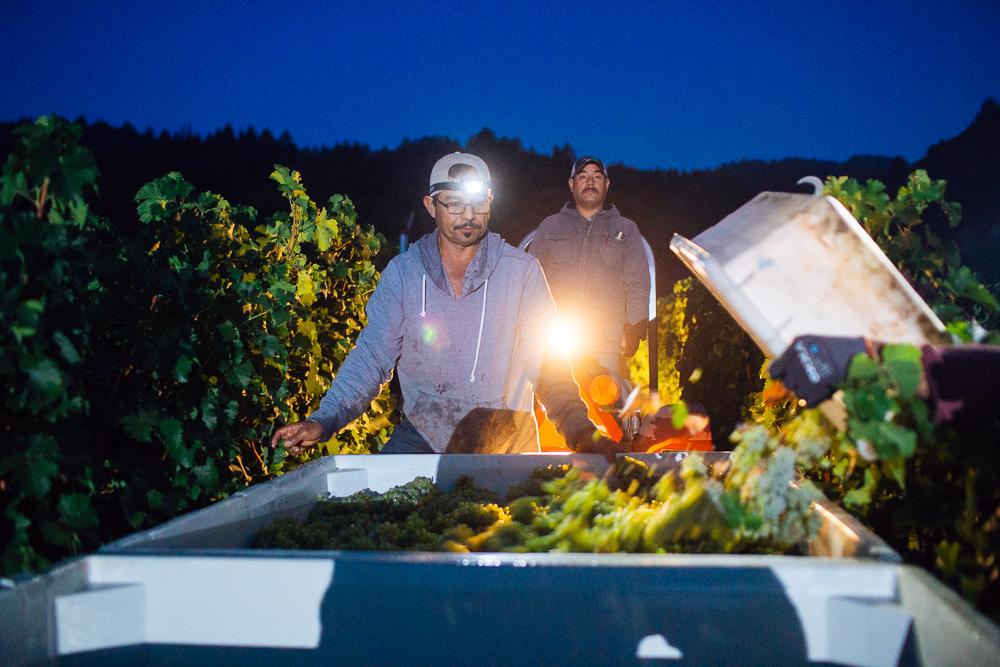 wine-harvest-photographer-in-napa-valley_0047